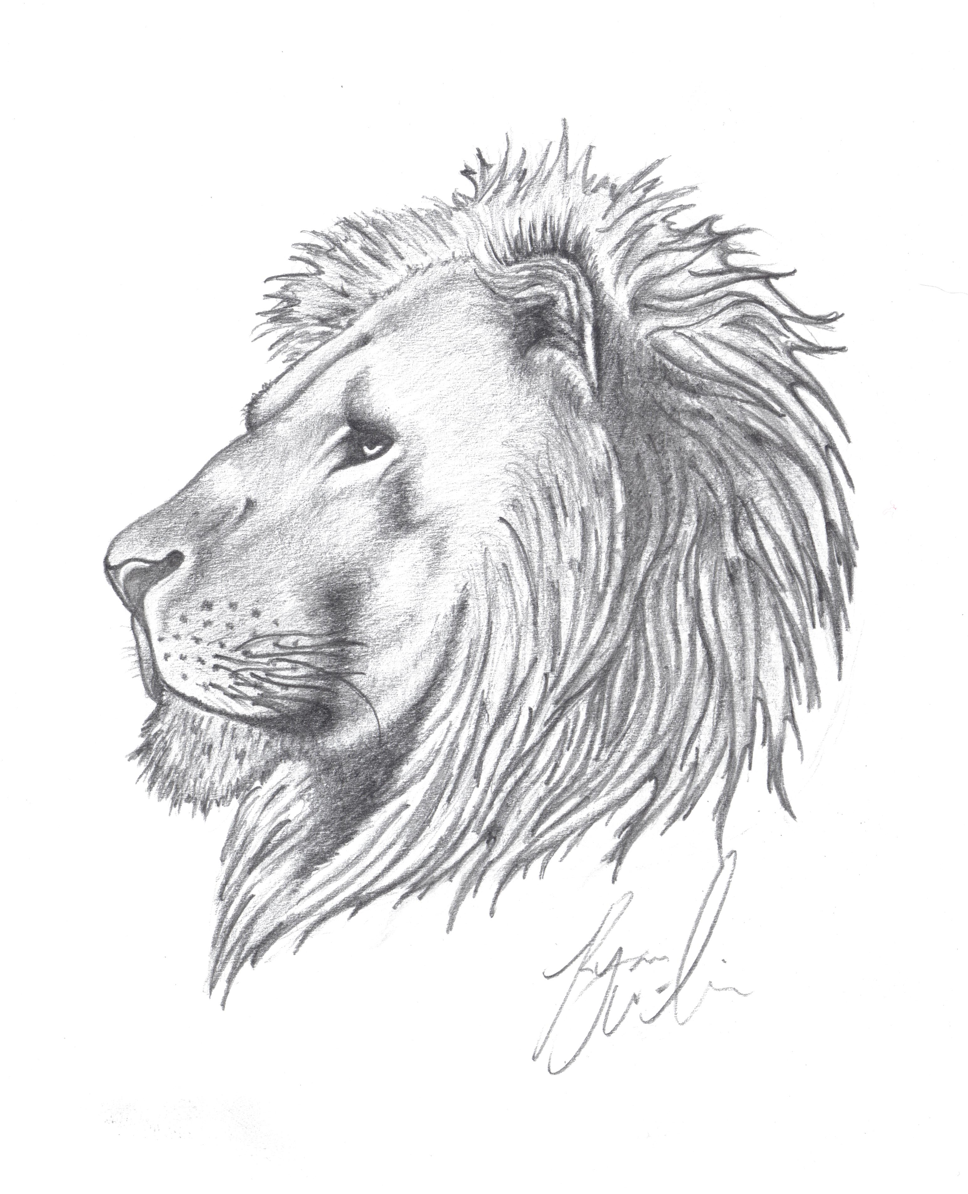 lion_drawing.jpg
